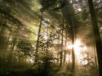 Avonmore Nature-wonder6