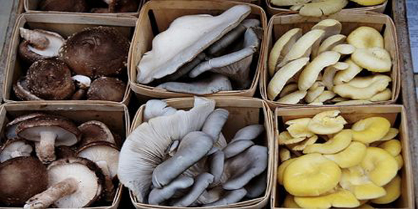 avonmore-farmer-market