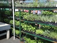 farmer-market-herb