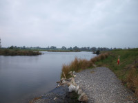 fishing-avonmore (16)
